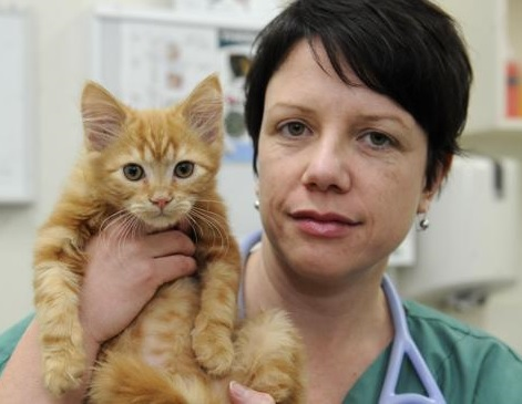 dierenarts+kitten